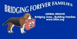 BFF Animal Rescue, Bridging Forever Families Animal Rescue, Virginia Martinez, Dog gym