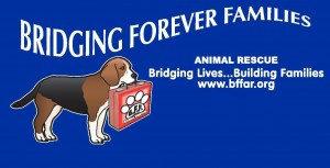 BFF Animal Rescue, Bridging Forever Families Animal Rescue, Dog gym