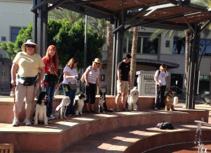 dog training outdoors, advanced dog training