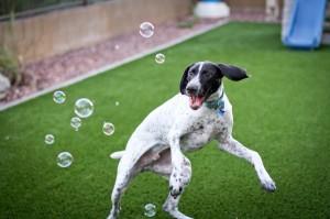 dog playing, dog training, dog exercise, dog walking