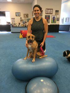 dog health classes
