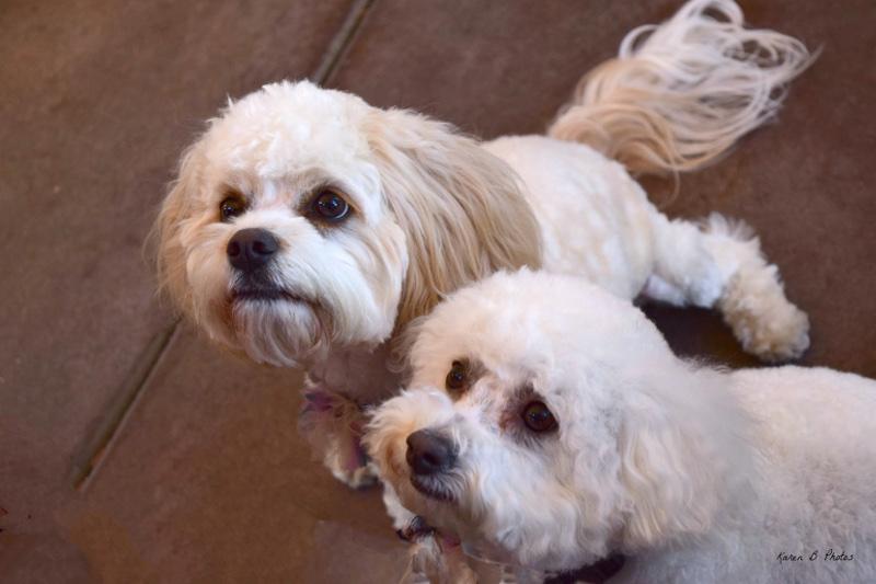 learn how to train your dog, dog training seminars, train my dog