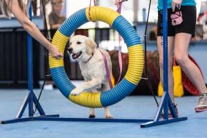 dog agility equipment, dog training, dog obedience, dog play