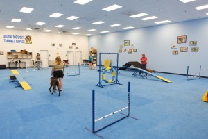 dog training phoenix az, dog training gym