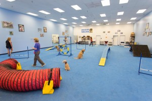 schools for dog trainers, puppy training phoenix, dog obedience training phoenix