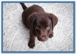 puppy training classes phoenix az