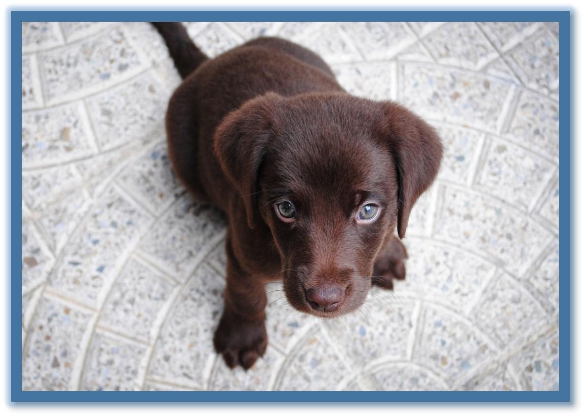 Dog Training Classes Phoenix Indoor Dog Training Az Dog Sports