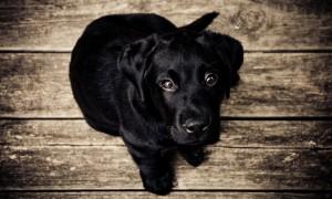 dog training classes phoenix, puppy training phoenix, dog behavior training