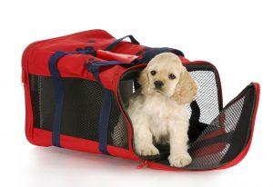 puppy training, dog training, az dog sports, dog training phoenix