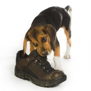 dog problem behaviors, dog training phoenix
