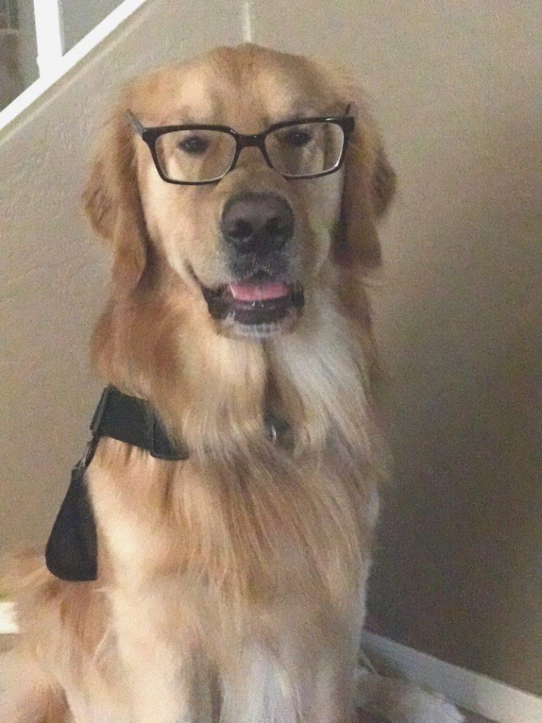 dog training seminars, learn how to train your dog, dog training