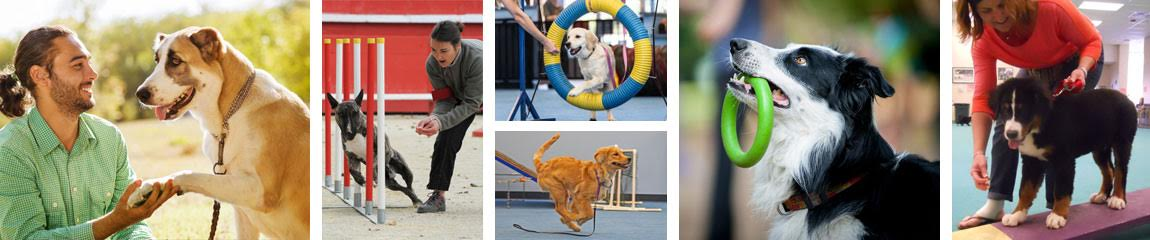 Dog training, be a dog trainer, dog agility, dog obedience