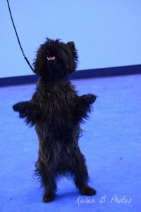 dog training, dog training phoenix, dog behavior problems