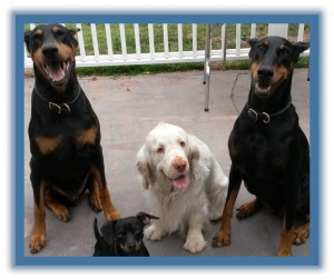 DOG BEHAVIOR CLASSES