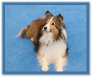 dog private training lessons phoenix az