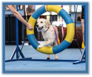 Dog Agility Training Classes Phoenix AZ
