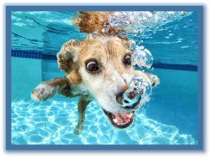 dog training in phoenix, private dog swim lessons