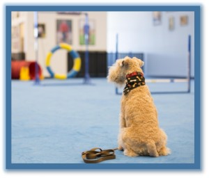 dog obedience training classes phoenix az