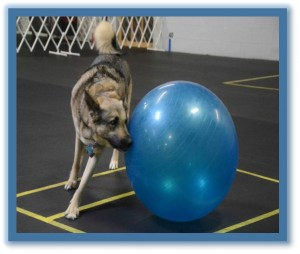 DOG SPORTS CLASSES