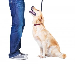 Dog Obedience Training CLass at AZ Dog Sports in Phoenix AZ