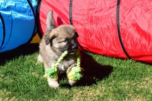 puppy training phoenix