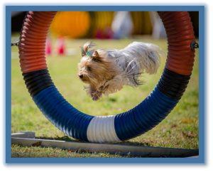 OUTDOOR DOG TRAINING CLASSES