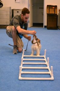 canine adventure course, dog training phoenix