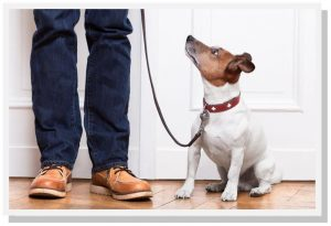 dog training classes phoenix/scottsdale schools for dog