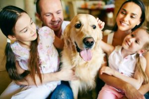 Phoenix Dog Sitting & In home Pet Sitting AZ Dog Sports