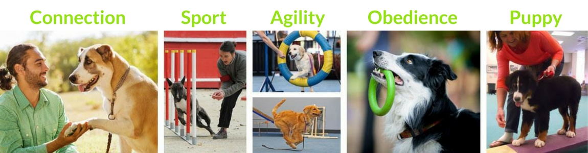 Dog Training Classes Schools for Dog Trainers AZ Dog Sports