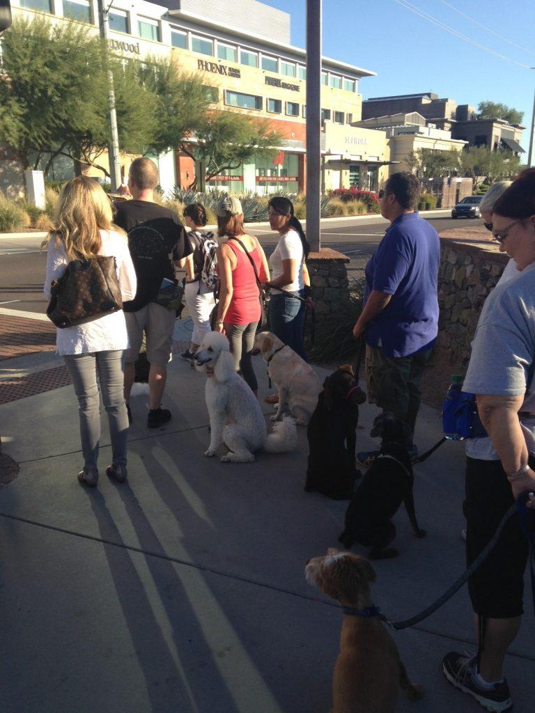 Urban Canine Good Citizen Training | AZ Dog Sports