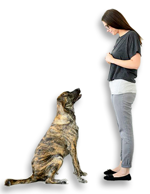 in home dog training, az dog sports, dog trainer phoenix