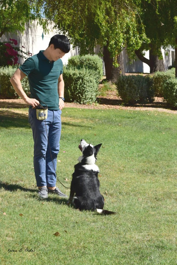 In-home dog training, az dog sports