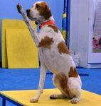 dog training phoenix, az dog sports, dog training gym
