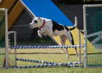 Is it a good idea for me to take Agility Classes with my dog?