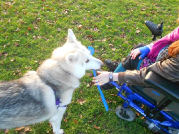 Dog Agility Training Az