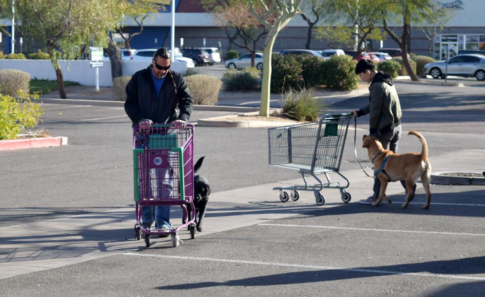 Parking Lot Dog Training Pics