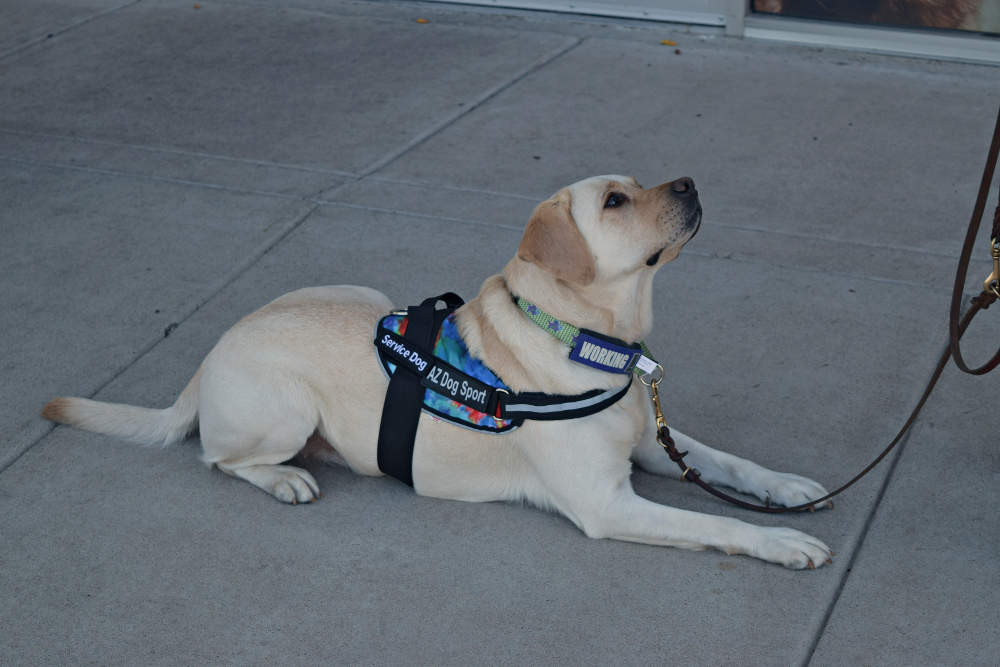 working dog, service dog training, dog training seminar