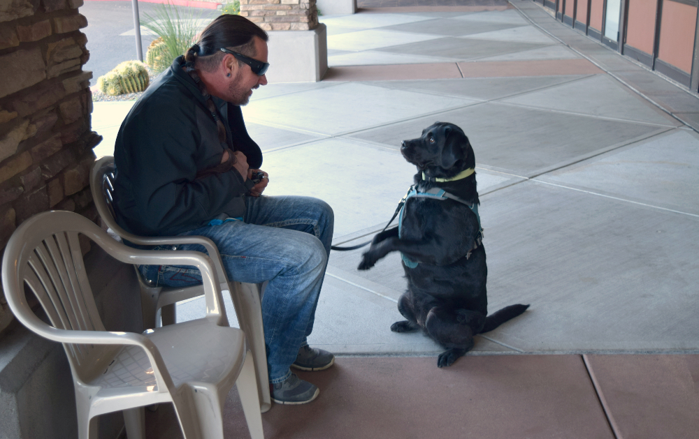 How To Train My Dog To Become A Service Dog