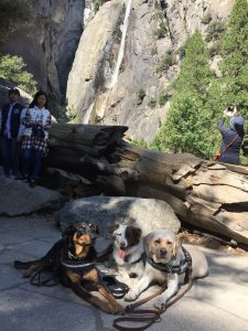 camping with dogs, az dog sports, jessa parker