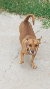justice, pets for adoption, az dog sports, dog training