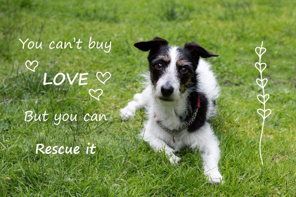adopt pet, adopt dog, rescue dog, dog rescue, adopt a dog