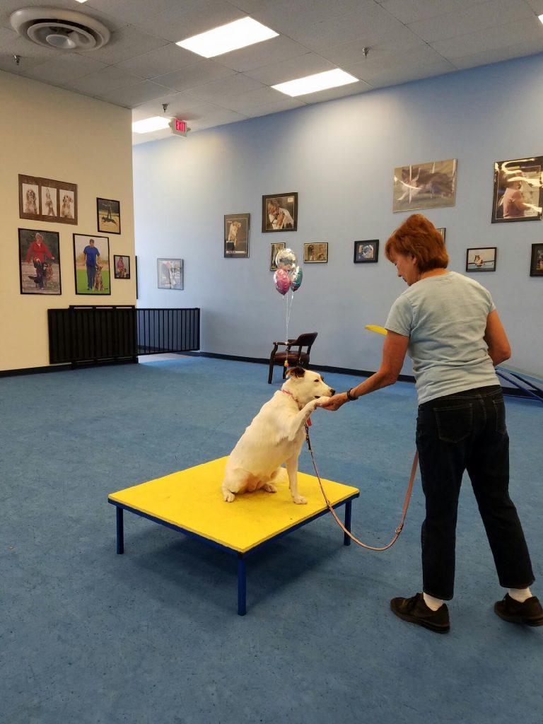 dog story, story, az dog sports