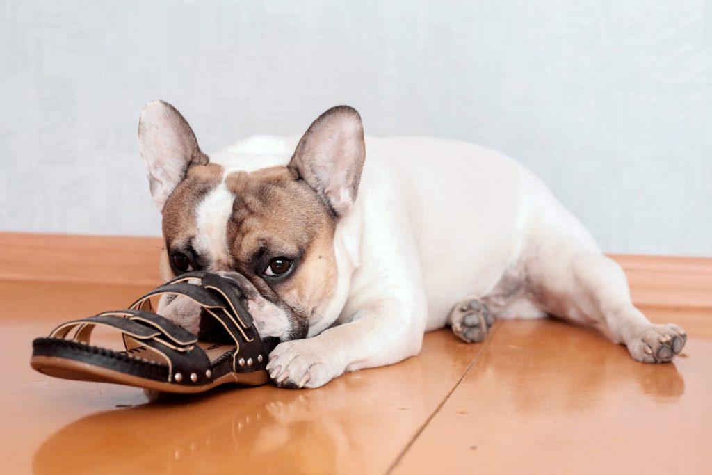 dog chewing, dog trainer phoenix, dog training tips, az dog sports