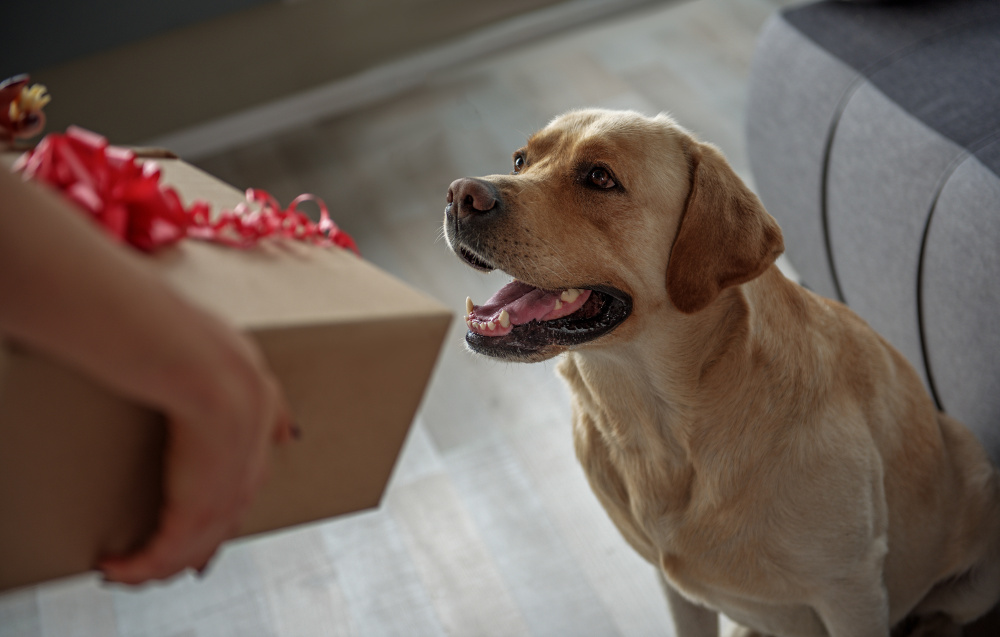 dog gifts, dog training phoenix, az dog sports, dog holiday