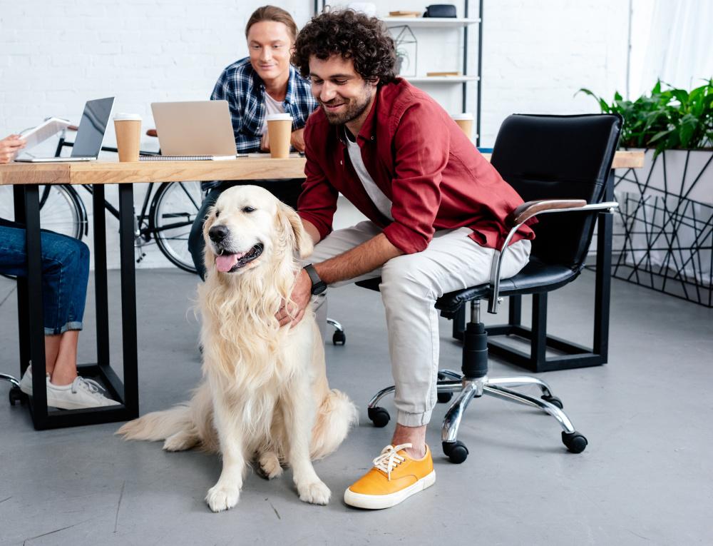 dog to work, dog training phoenix, az dog sports, dog trainer