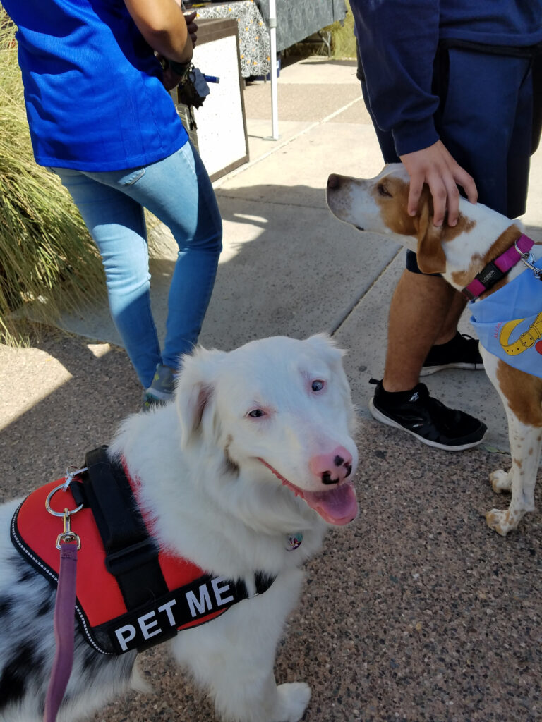 therapy pet, az dog sports, julie brewer, alliance of therapy dogs