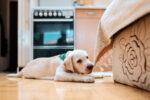 training a puppy, az dog sports
