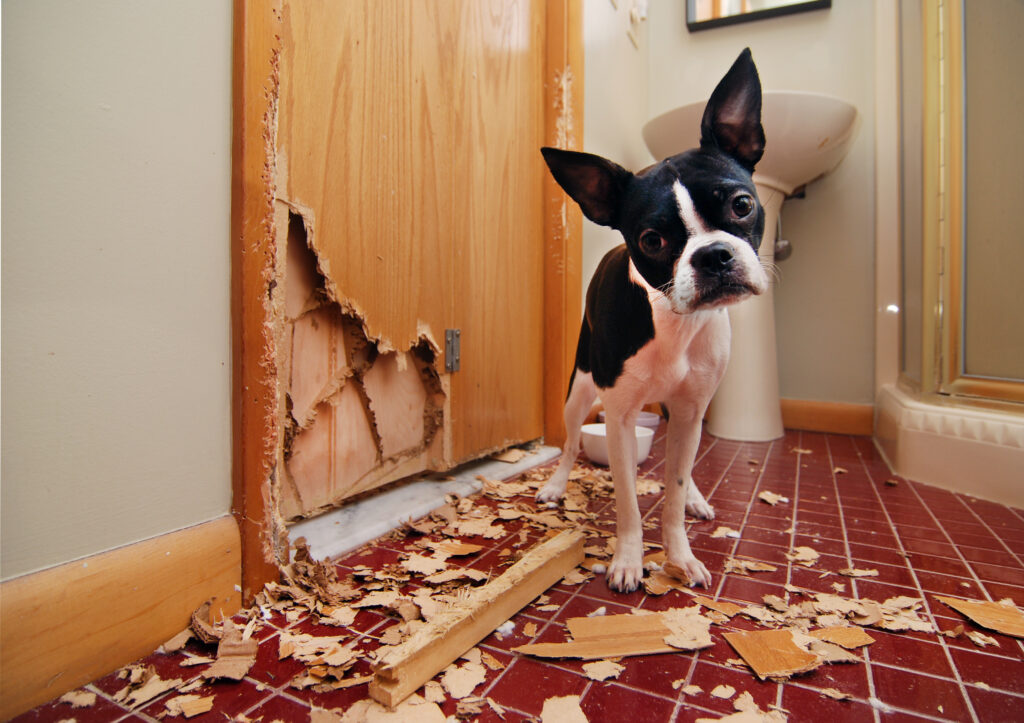 separation anxiety, separation anxiety dogs, az dog sports, dog training phoenix