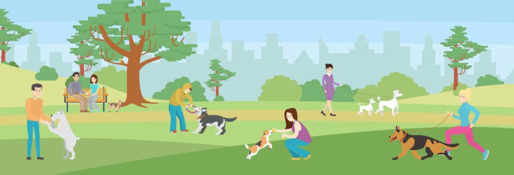 dog park, az dog sports, dog training phoenix